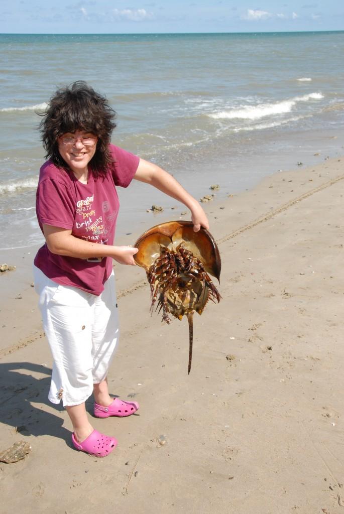 Natacha a trouvé une limule sur une plage de Bornéo